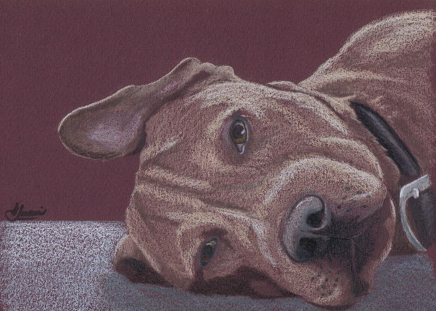Pit Bull Drawing - Dog Tired by Stacey Jasmin