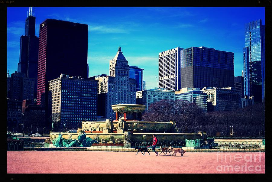 Illinois Photograph - Dog Walking City of Chicago by Frank J Casella
