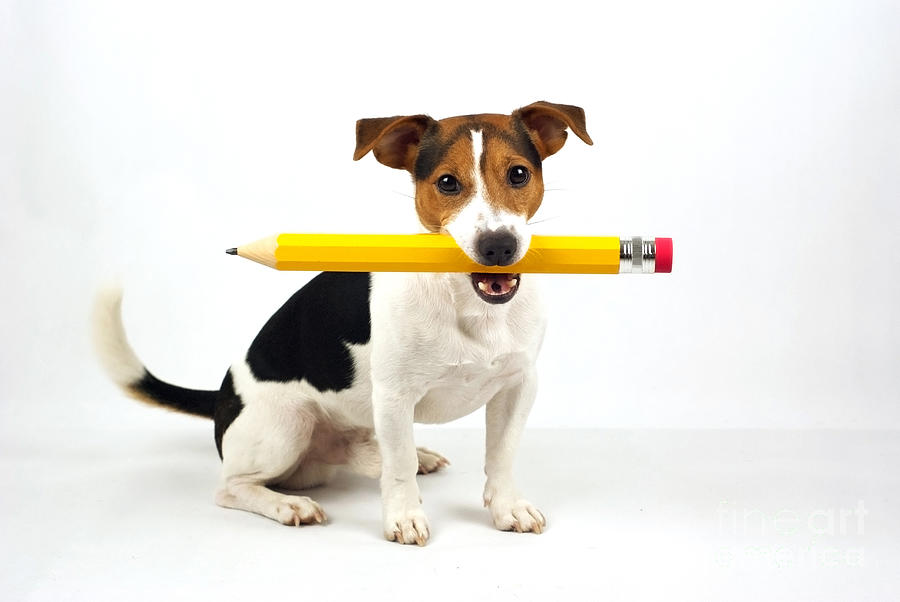 Puppy With Yellow Pencil Photograph