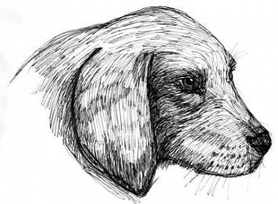 Doggie Drawing by Caroline Lifshey