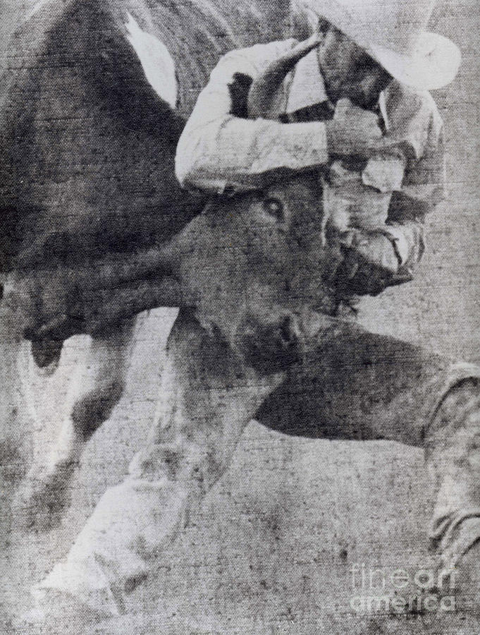 Cowboys Photograph - Doggin It by Norman Andrus