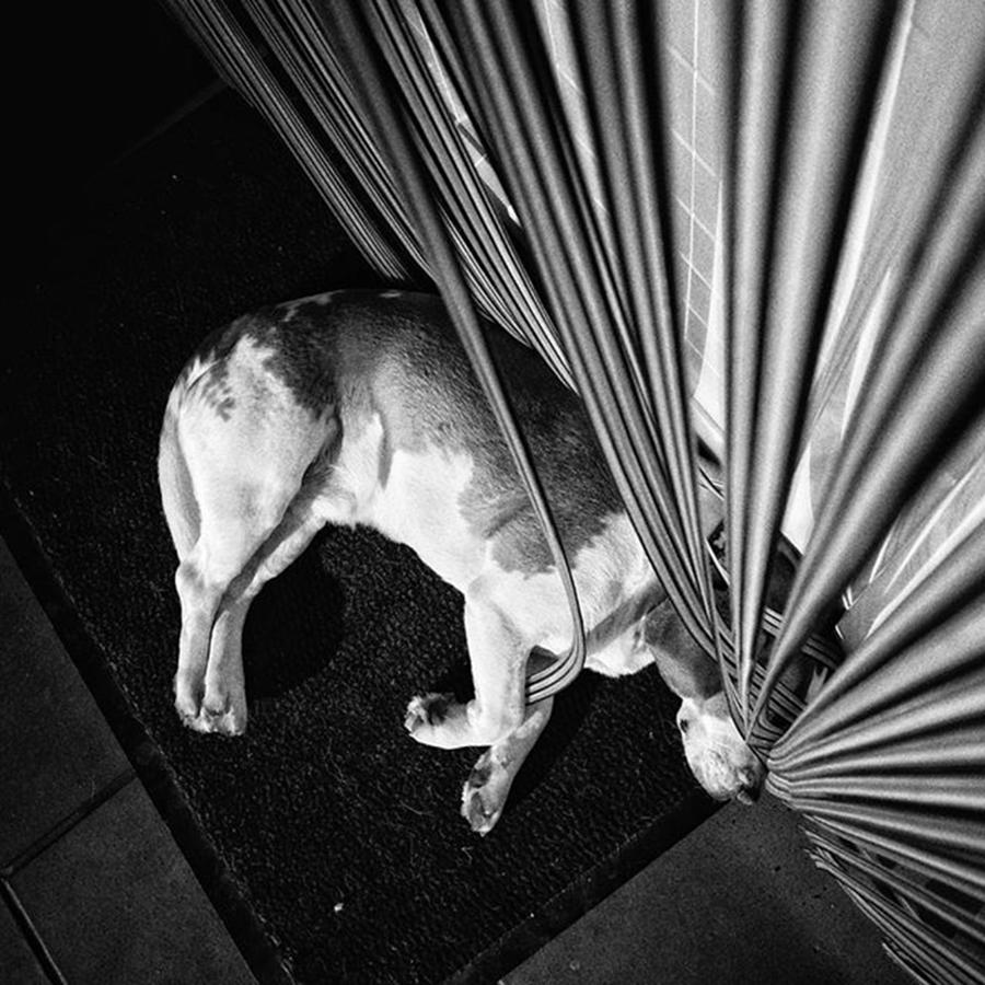 Pet Photograph - Dog.net  #dog #animal #pet #instadog by Rafa Rivas