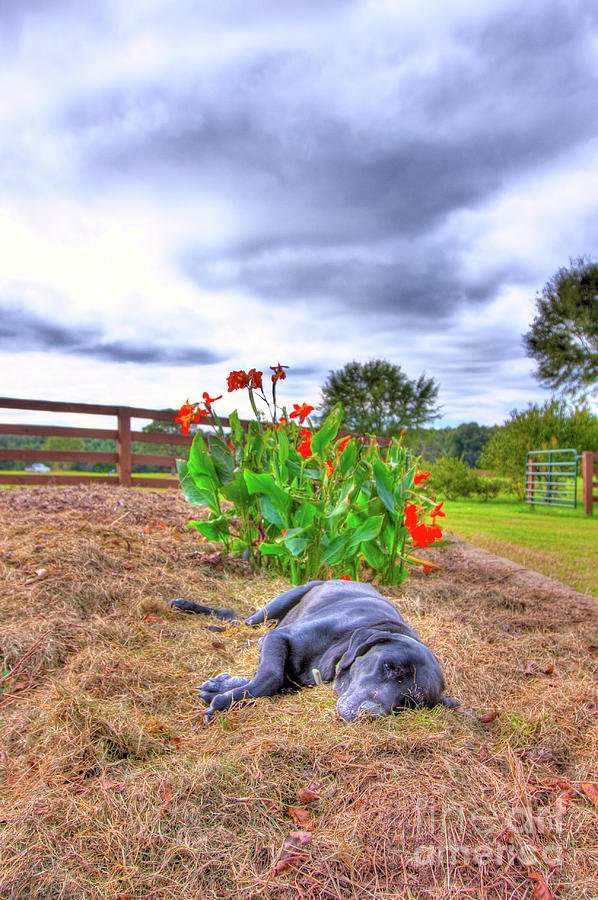 Dog Photograph - Dogs Life by Ted Reynolds