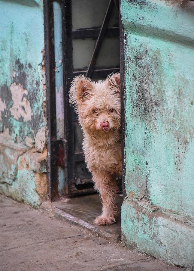 Dogs Photograph - Dogs Of Cuba - 2 by Rand