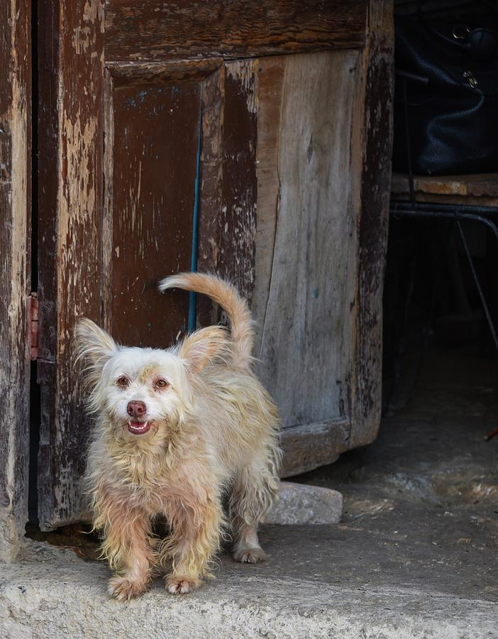 Dogs Photograph - Dogs Of Cuba - 3 by Rand