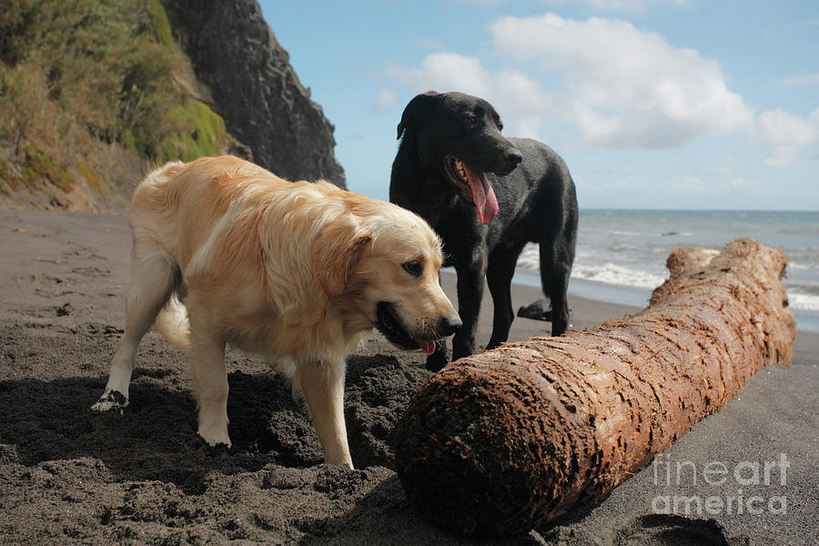 Dogs Photograph - Dogs Playing At The Beach by Gaspar Avila