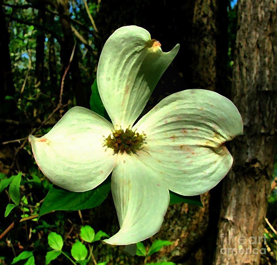 Dogwood Blossom Photograph - Dogwood Blossom I by Julie Dant