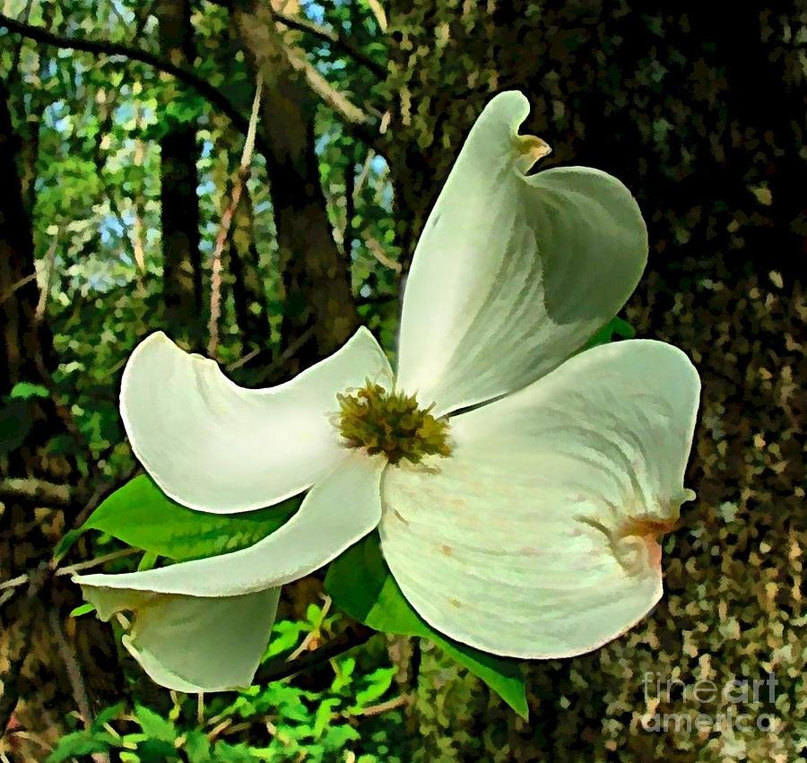 Flower Photograph - Dogwood Blossom II by Julie Dant