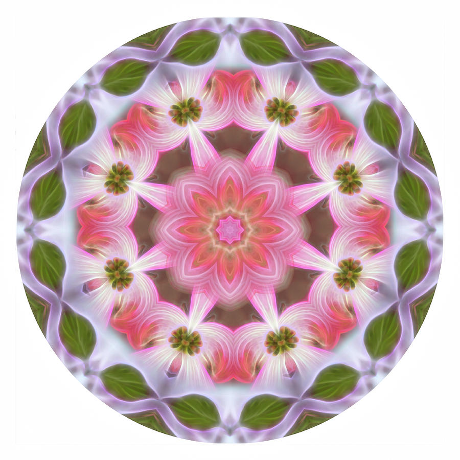Dogwood Energy Mandala by Beth Sawickie