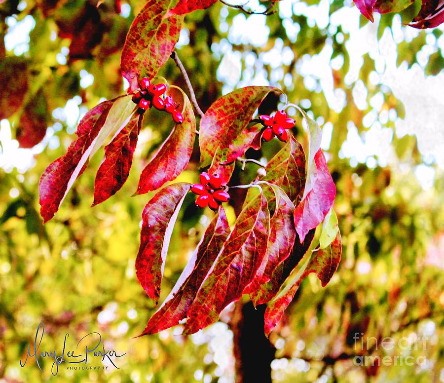 Photograph Photograph - Dogwood Leaves by MaryLee Parker