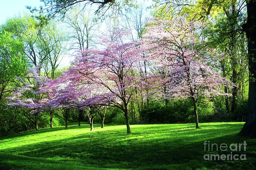 Dogwood Tree Photograph - Dogwood Spring by Luther Fine Art