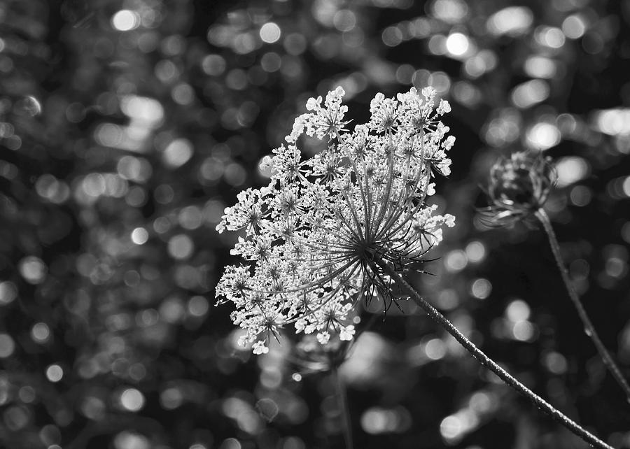 Flora Photograph - Doily by Photography by Tiwago