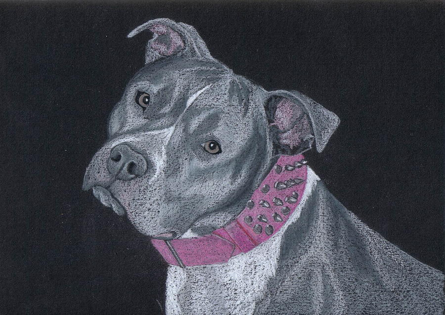 Pit Bull Drawing - Dolce by Stacey Jasmin