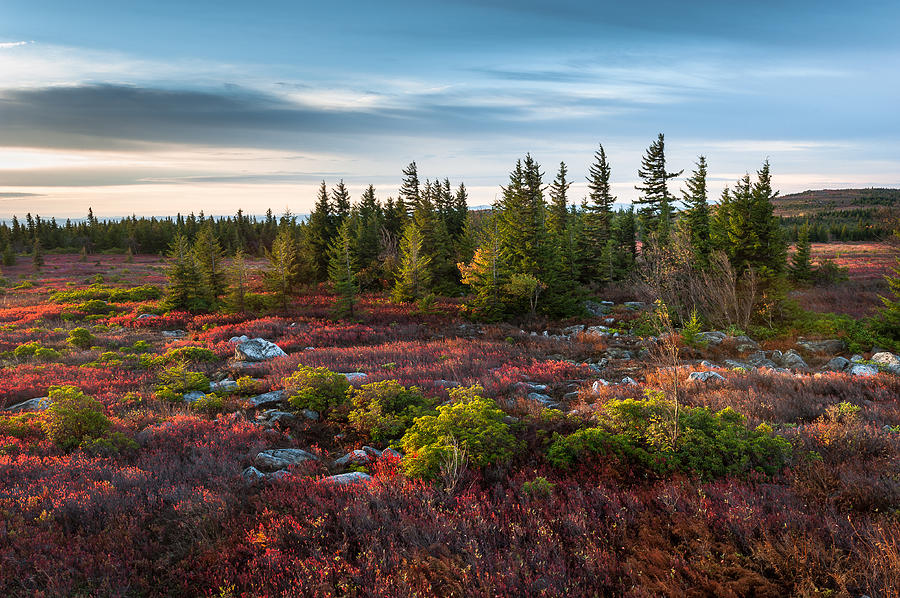 Dolly Sods Photograph - Dolly Sods Wilderness Area West Virginia by Mark VanDyke