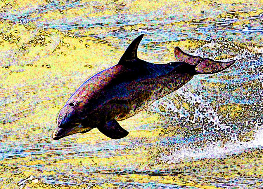 Dolphin Photograph - Dolphin by John Collins