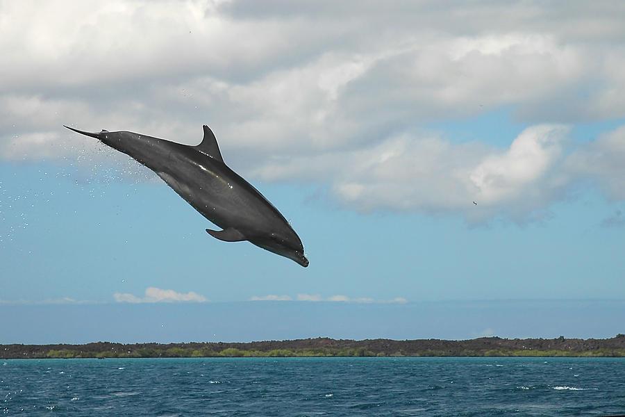 Dolphin Photograph - Dolphin Jump by Alan Lenk