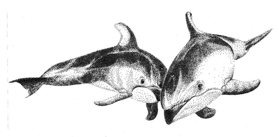 Dolphin Drawing - Dolphins Togeter by Greg McBride