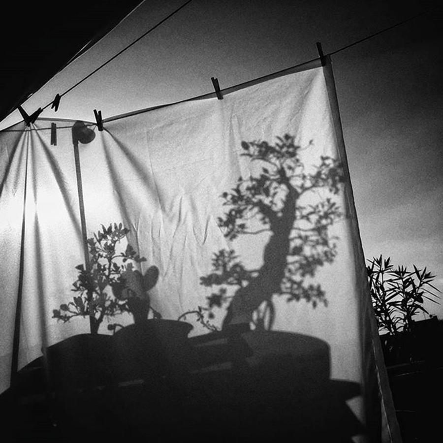 Shadow Photograph - Dombres Chinoises  #shadow #bonsai by Rafa Rivas