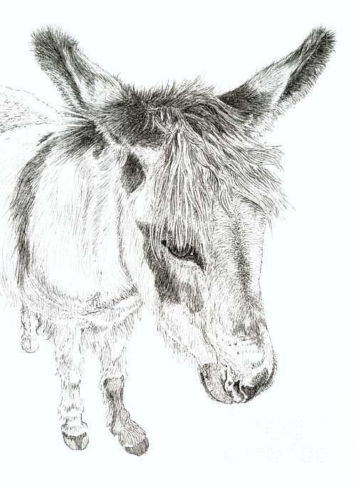 Donkey 3 Painting by Keran Sunaski Gilmore
