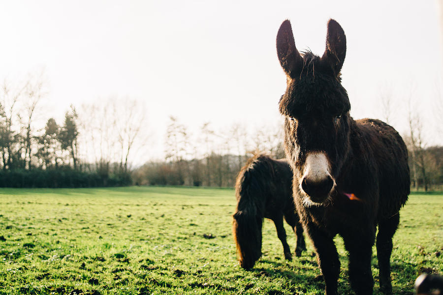 Winter Photograph - Donkey And Pony by Pati Photography