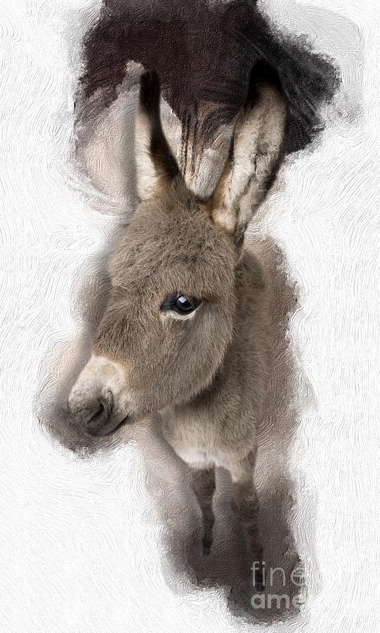 Donkey Digital Art - Donkey Foal No 02 by Maria Astedt