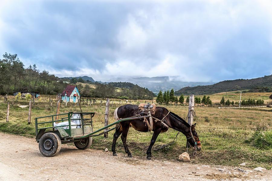 Donkey by Jaime Mercado