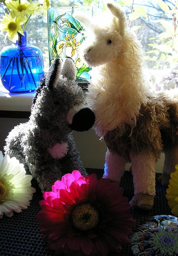Stuffed Animals Photograph - Donkey Joti And Dali Llama by Christina Gardner