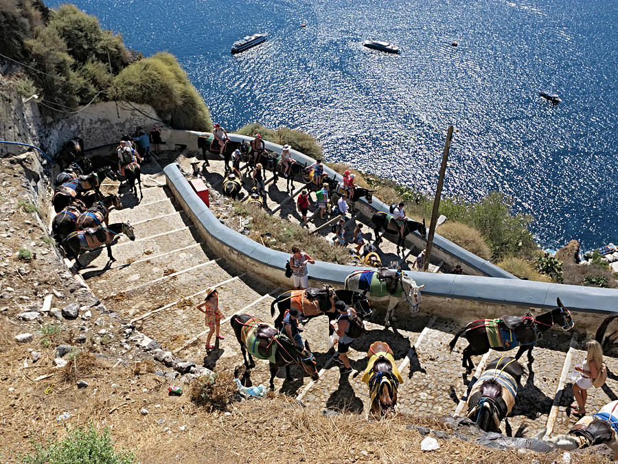Donkeys of Santorini by S Paul Sahm