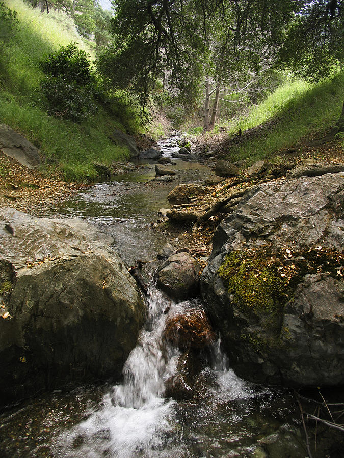 Mt. Diablo Photograph - Donner Creek by Karen  W Meyer