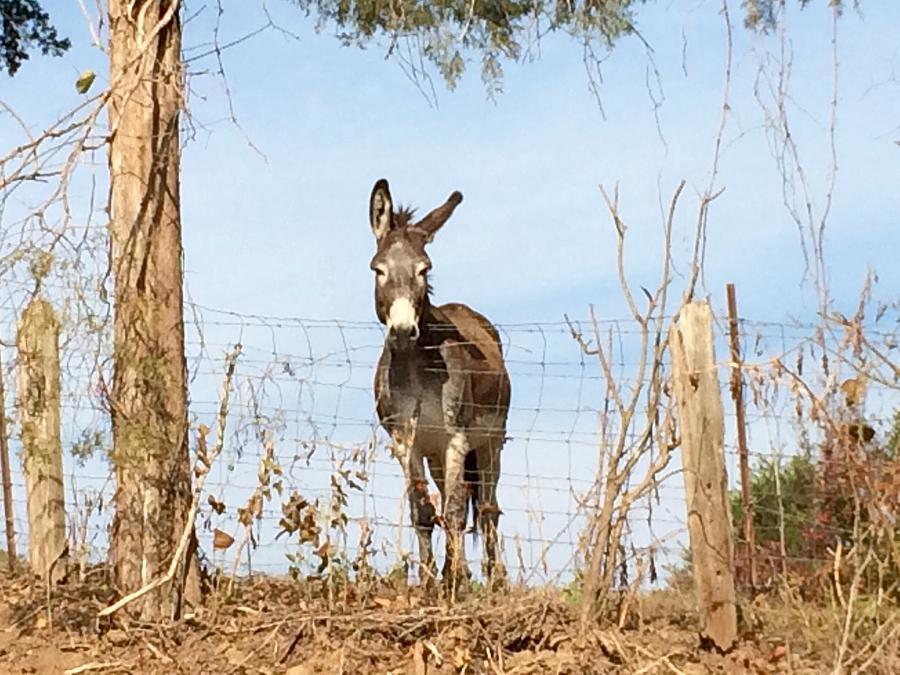 Donkey Photograph - Dont Be A Stranger by Frank TuttPutt Tuttle