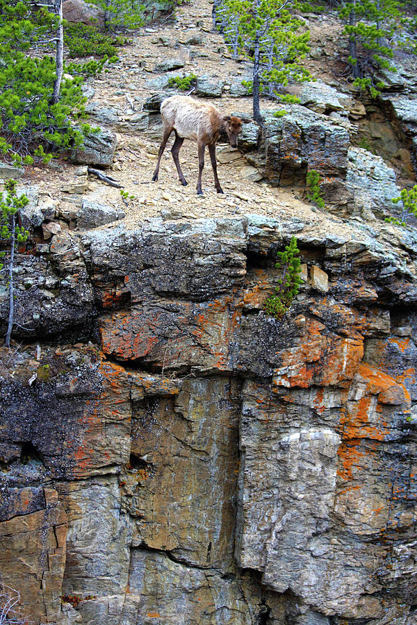 Dont Jump Photograph by Shane Bechler