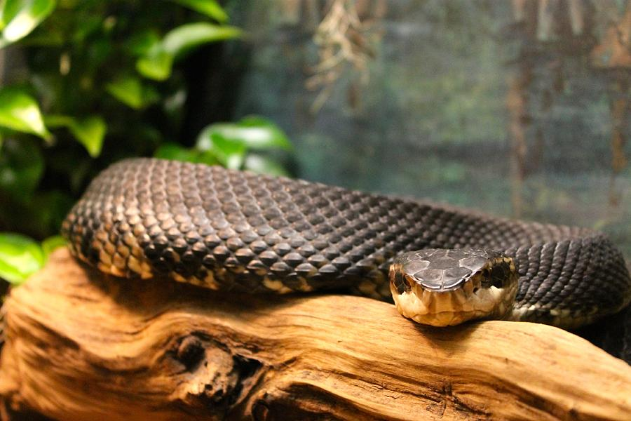 Snake Photograph - Dont Move by Jennifer Raines