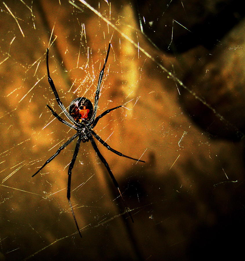 Spider Photograph - Dont Touch Me by Nico Smith