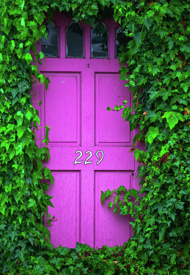 Door 229 Photograph