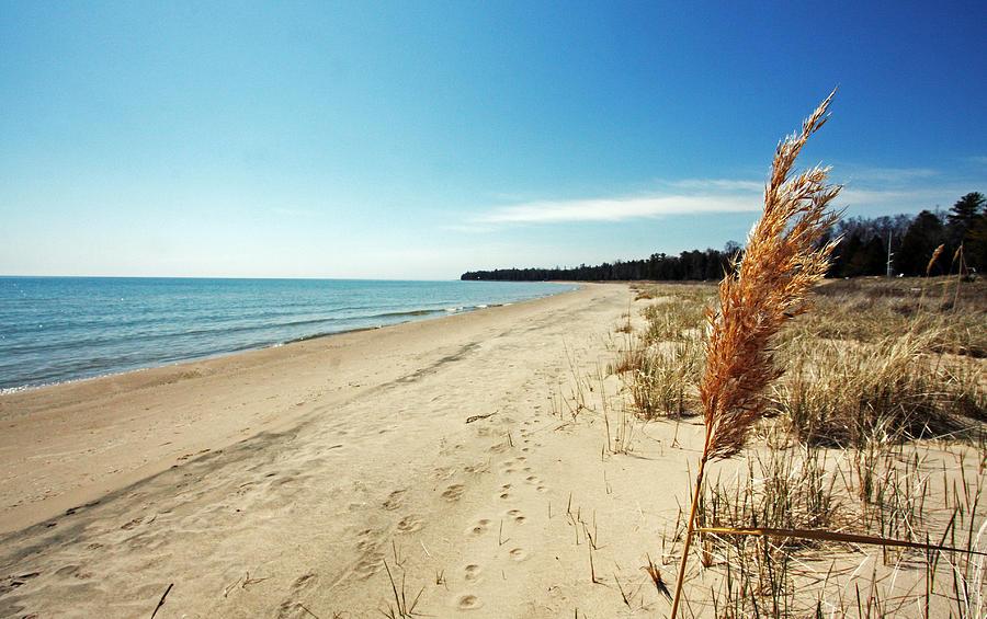 Door County Photograph - Door County Beach by Ty Helbach