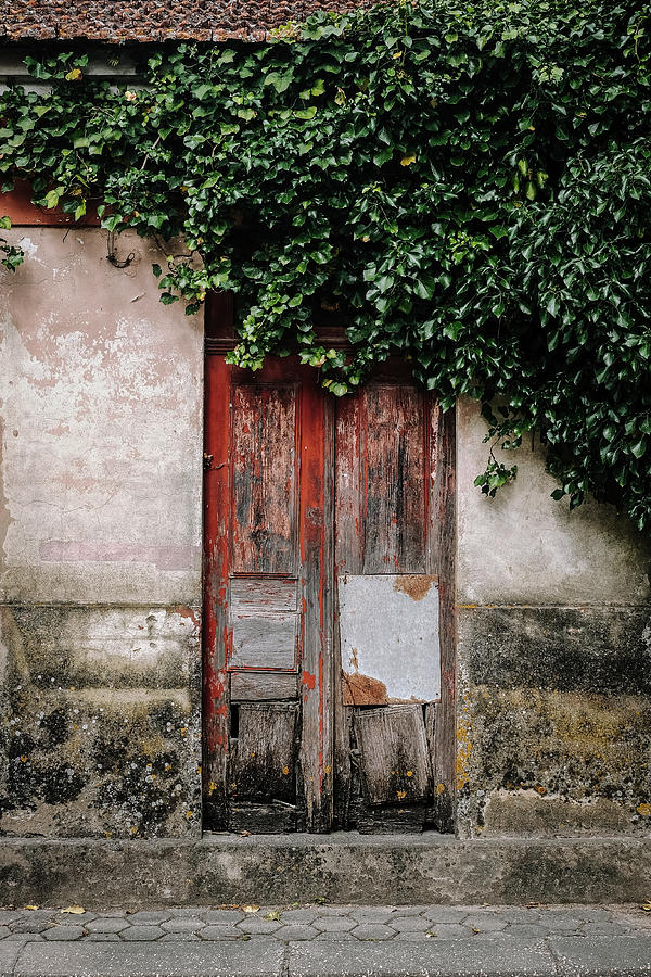 Street Photograph - Door Covered With Ivy by Marco Oliveira