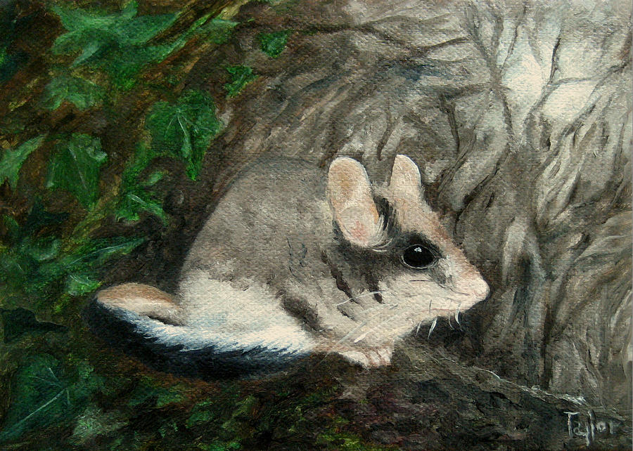 Dormouse by FT McKinstry