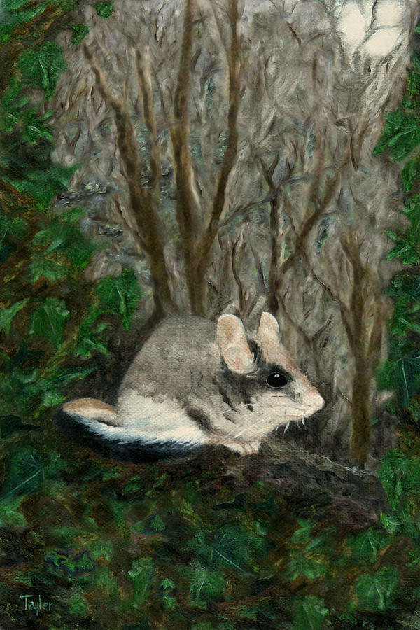 Dormouse in Ivy by FT McKinstry