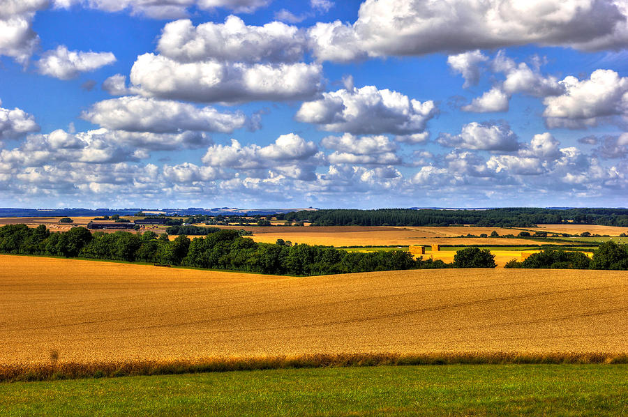 Fields Photograph - Dorset fields in late July by Peggy Berger