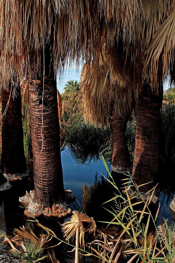 Oasis Photograph - Dos Palmas Oasis by David Salter