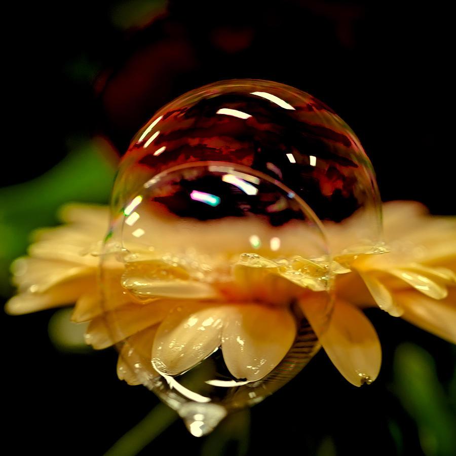 Double Bubble Flower Photograph by David Patterson