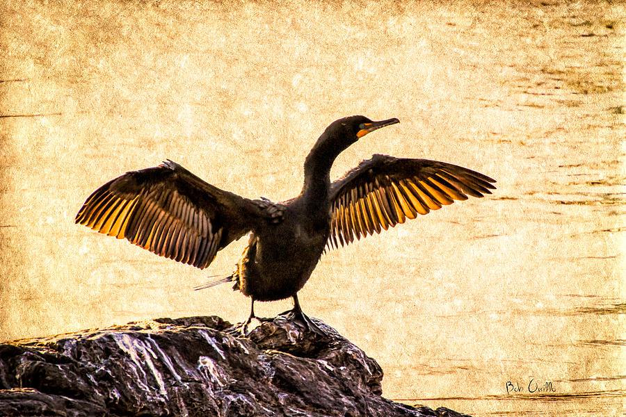 Double-crested Cormorant Photograph - Double-crested Cormorant by Bob Orsillo