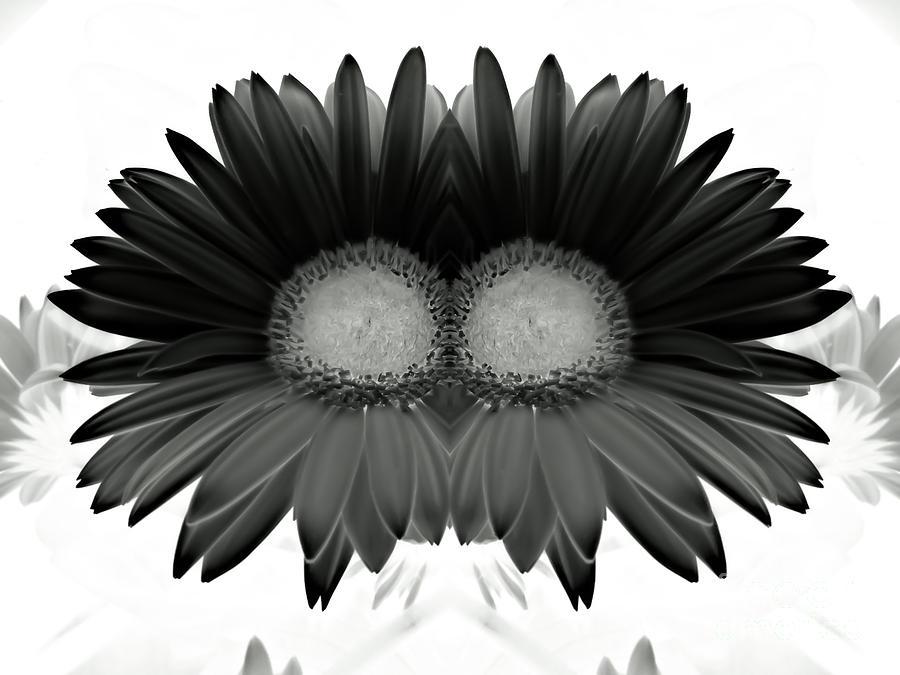 Double Photograph - Double Daisy Noir by Heather Joyce Morrill