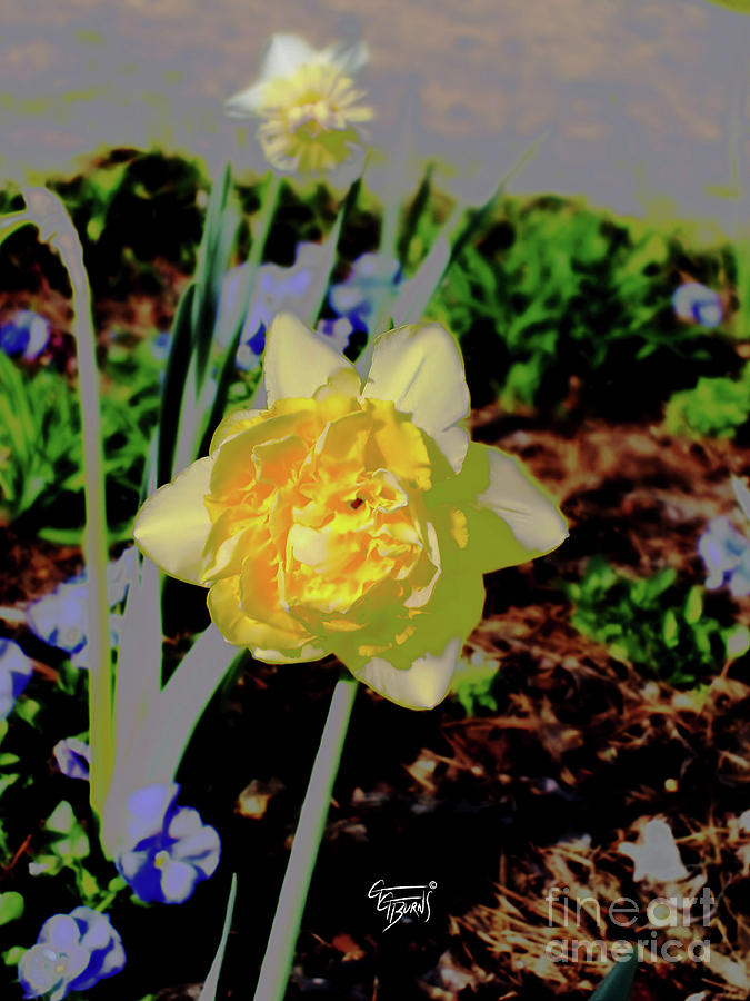 double duty daffodils by GG Burns