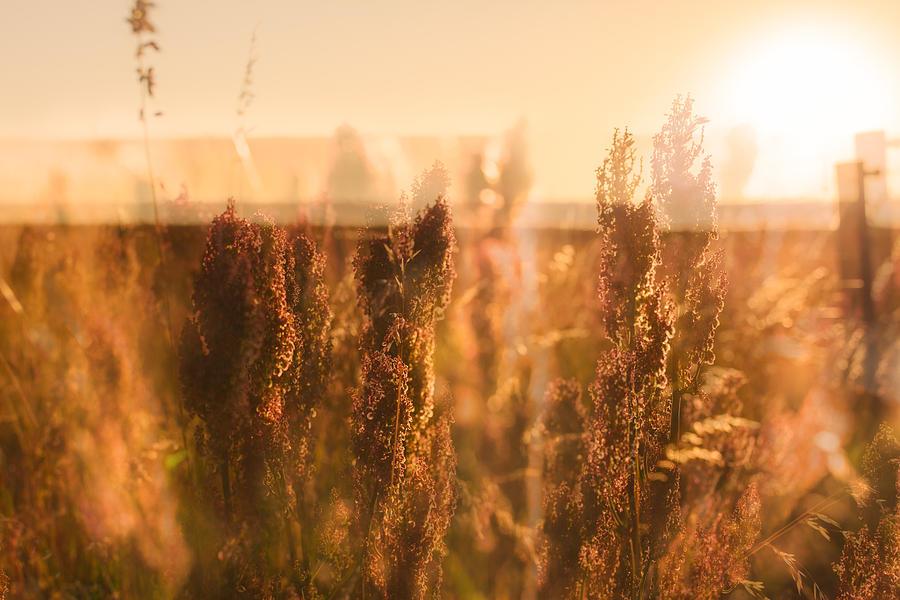 Double Fields Photograph