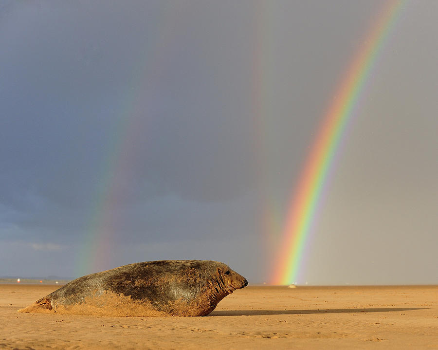 Double Photograph - Double Rainbow and Seal by Phillips and Phillips