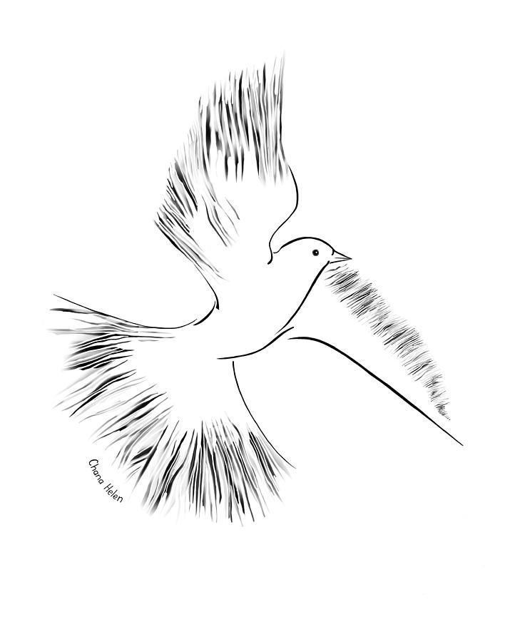 Dove Digital Art - Dove by Chana Helen Rosenberg