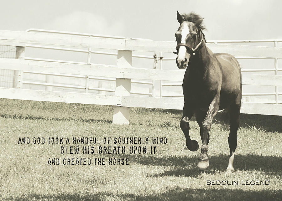 Horse Photograph - Down And Back Quote by JAMART Photography