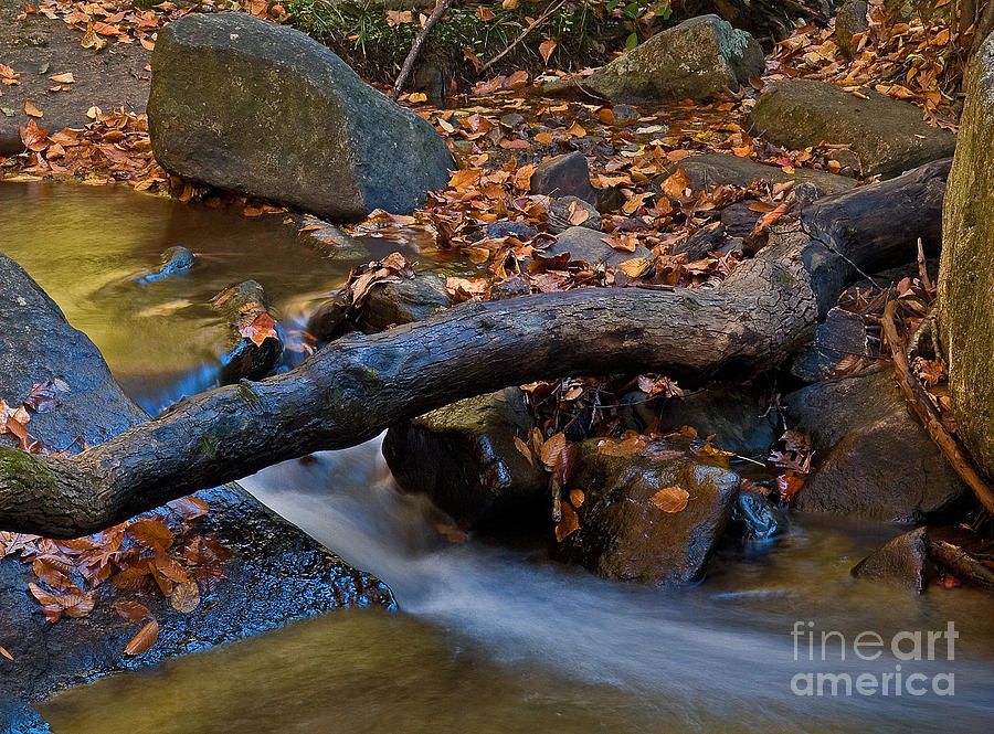 Nature Photograph - Down By The River by Robert Pilkington