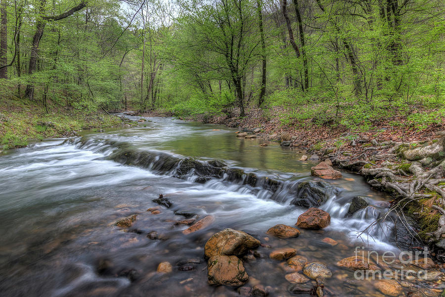 Down Stream by Larry McMahon